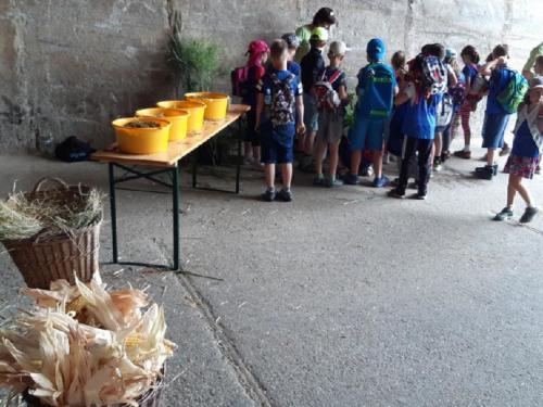 ZŠ: Příběh potravin - červen 2019